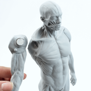Écorché Figura Masculina 30cm